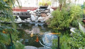 water-fall-koi-fish-pond
